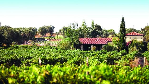 Urla Wine Route Perks Ups as Vineyards Unite